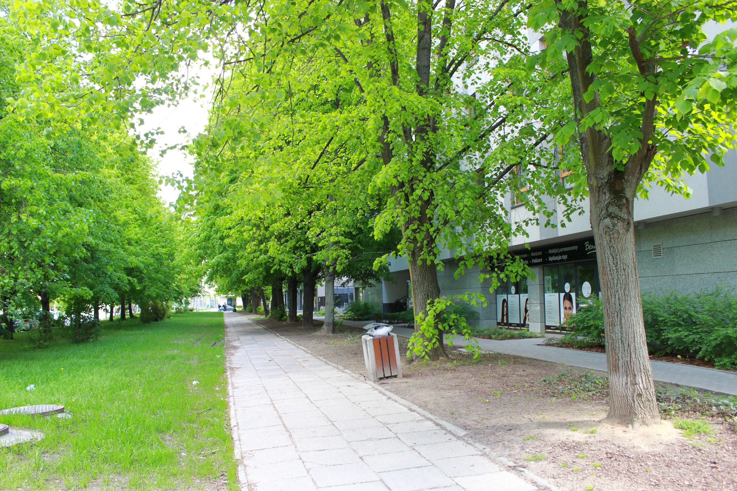 chodnik wśród drzew w mieście