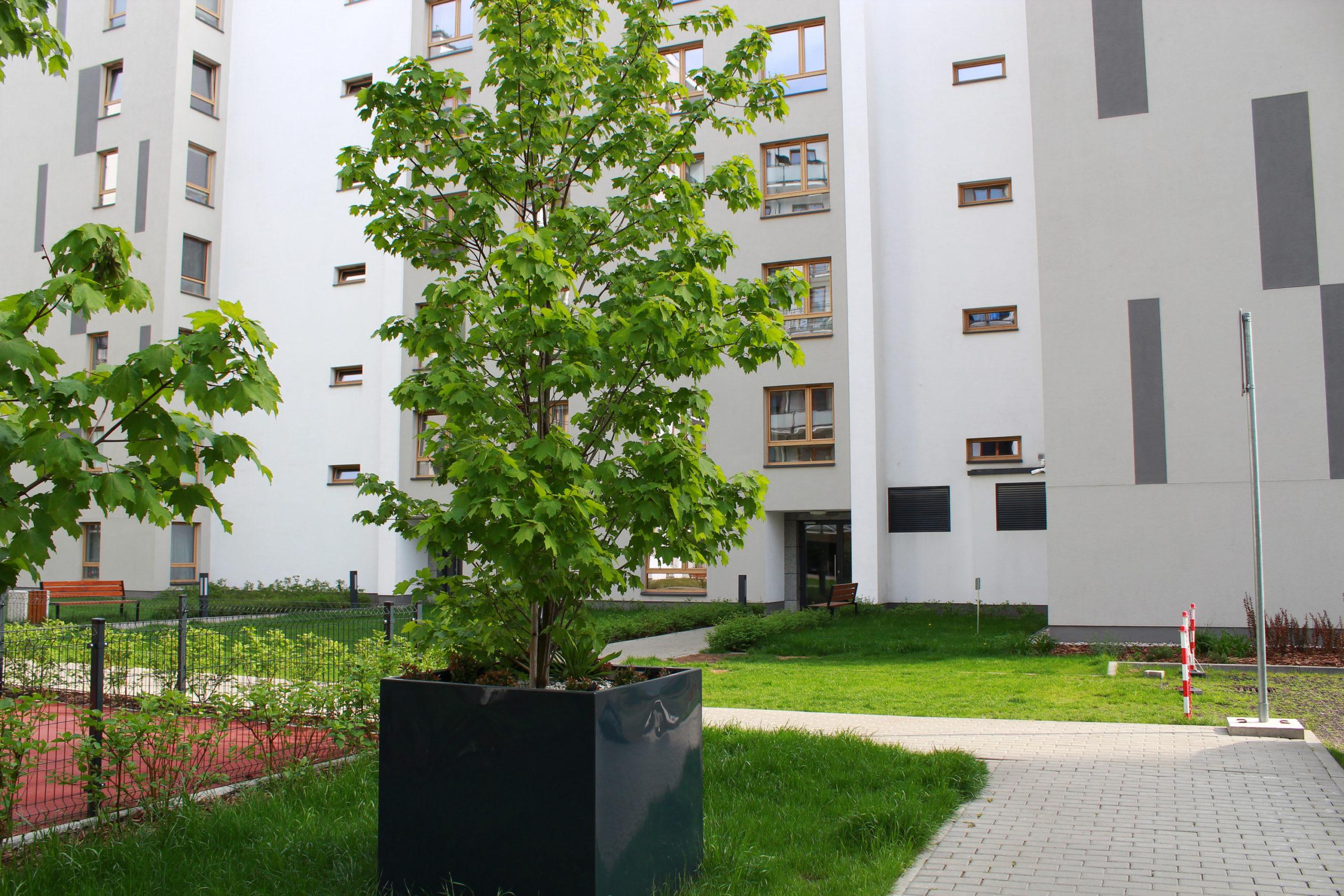 drzewo w donicy na osiedlu