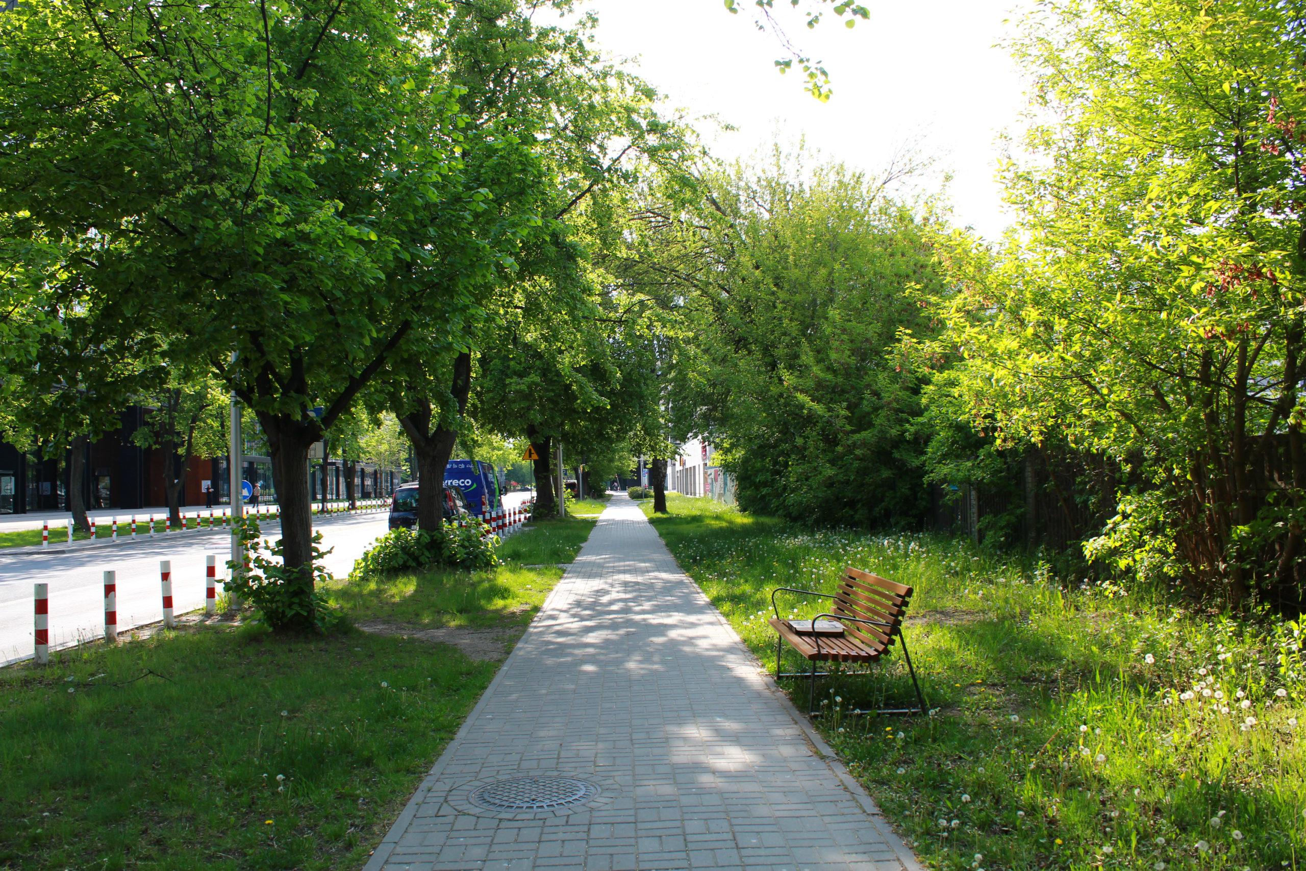 chodnik i ławka wśród drzew