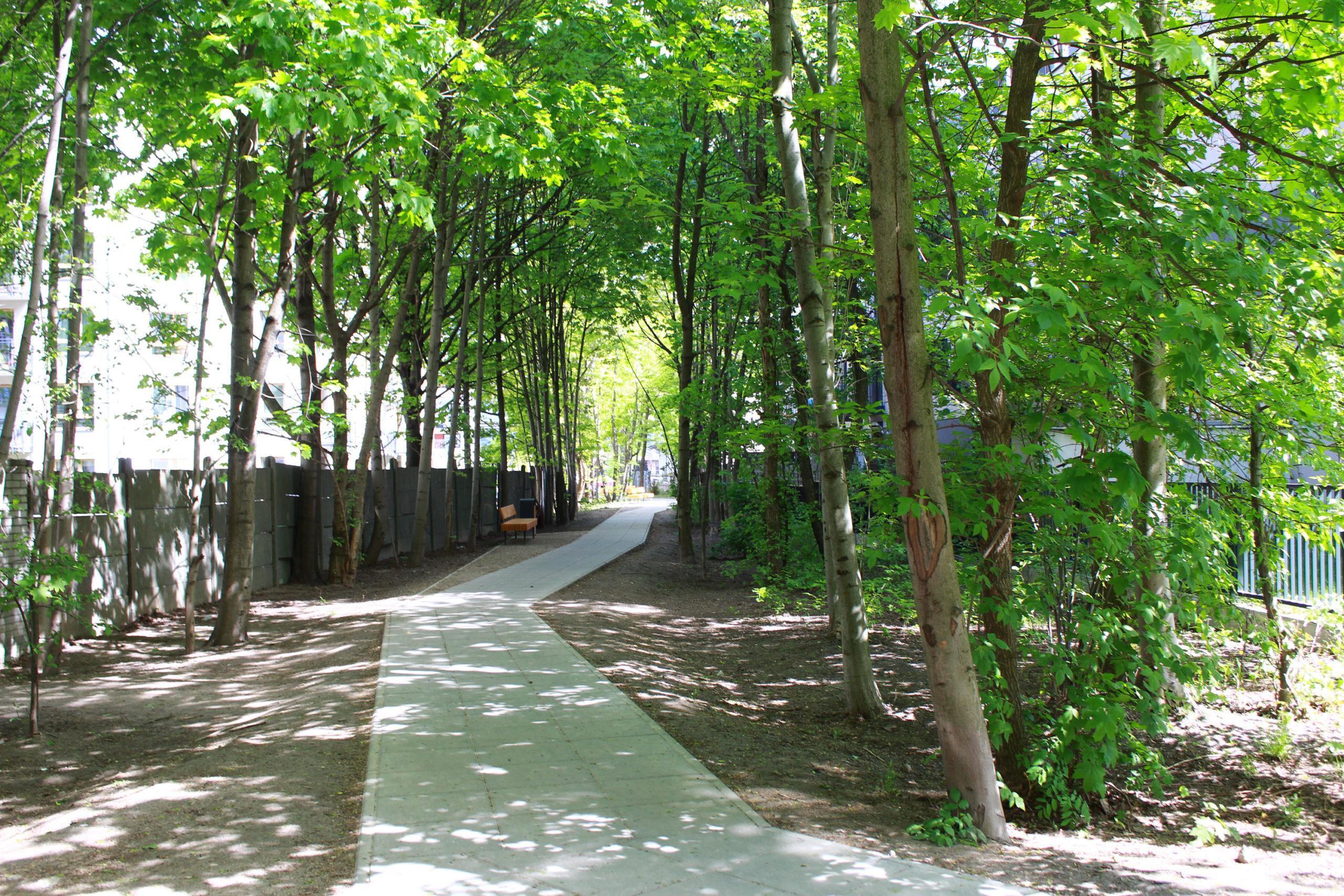 chodnik wśród drzew