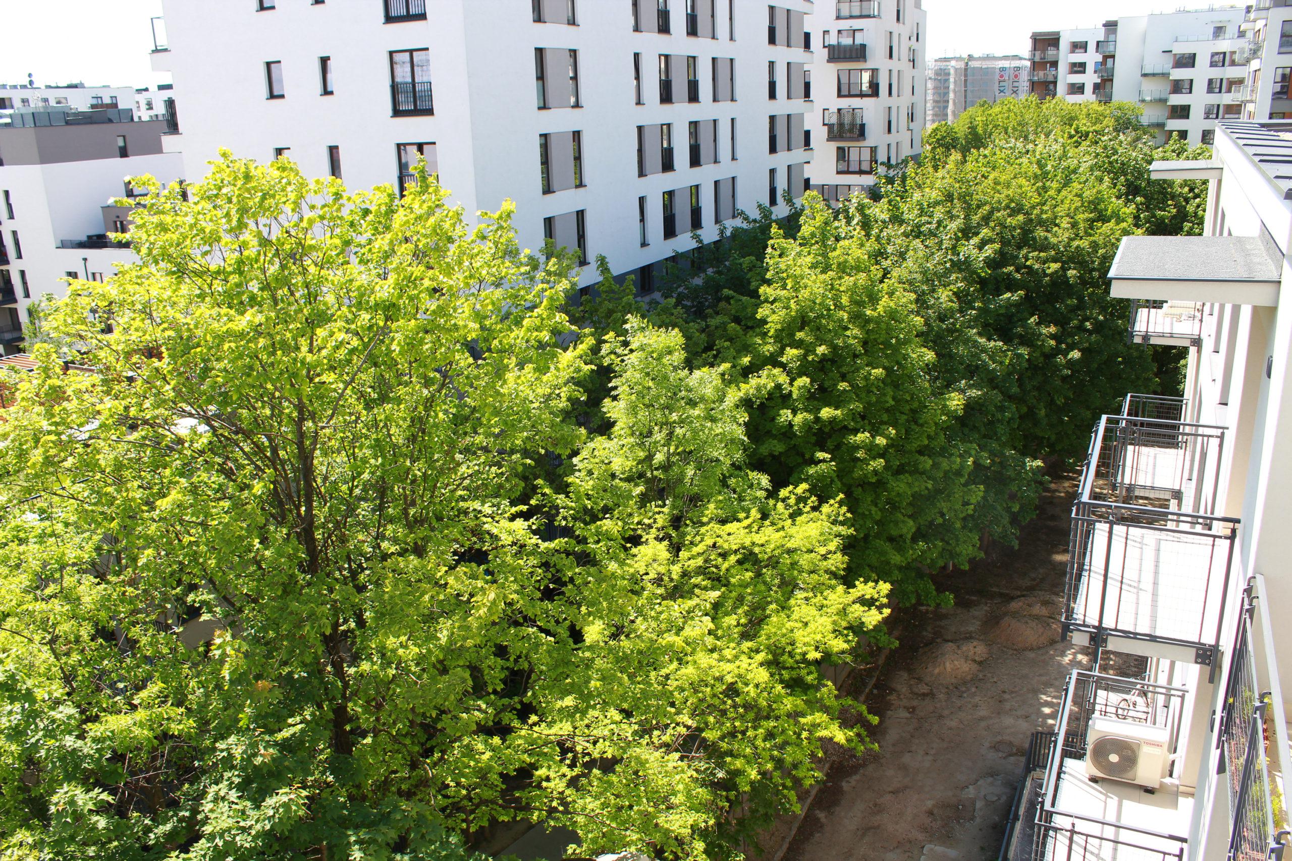 widok z balkonu na drzewa na osiedlu