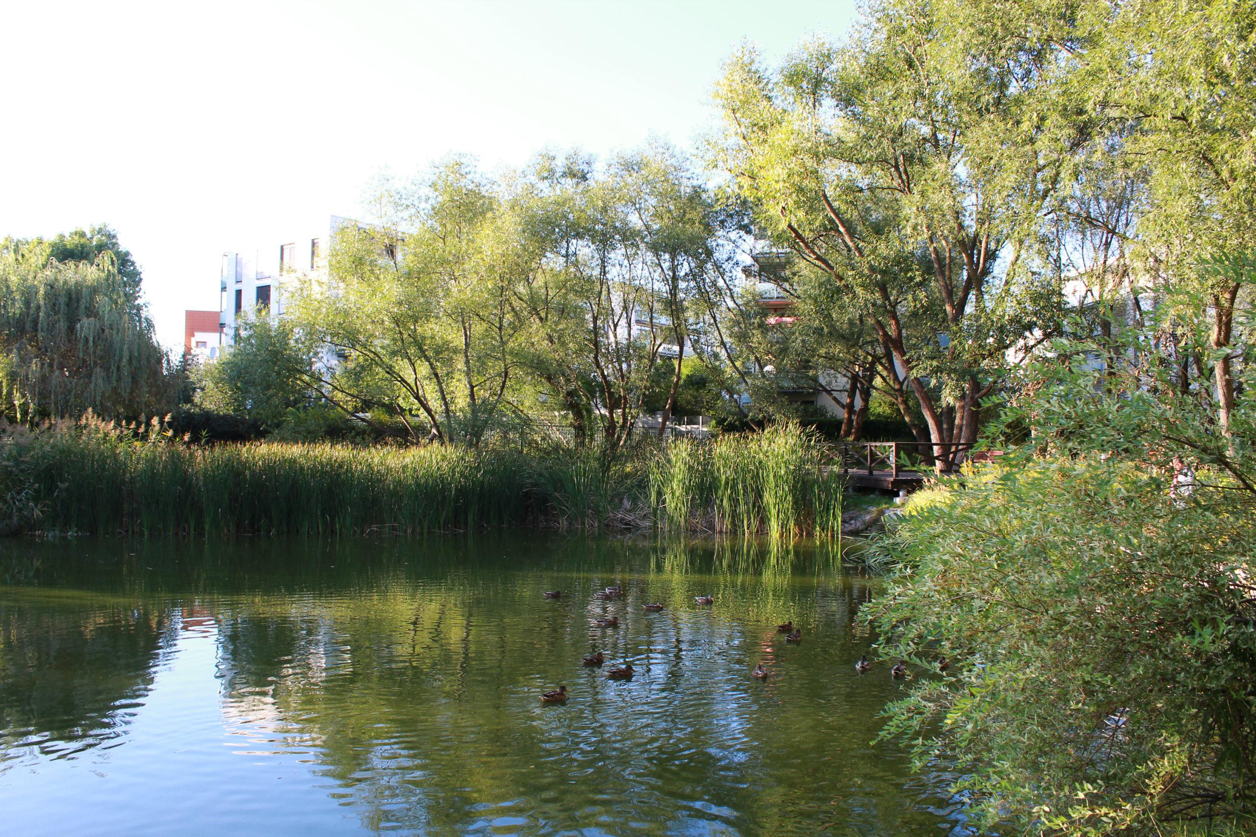 jeziorko z zielenią na brzegach