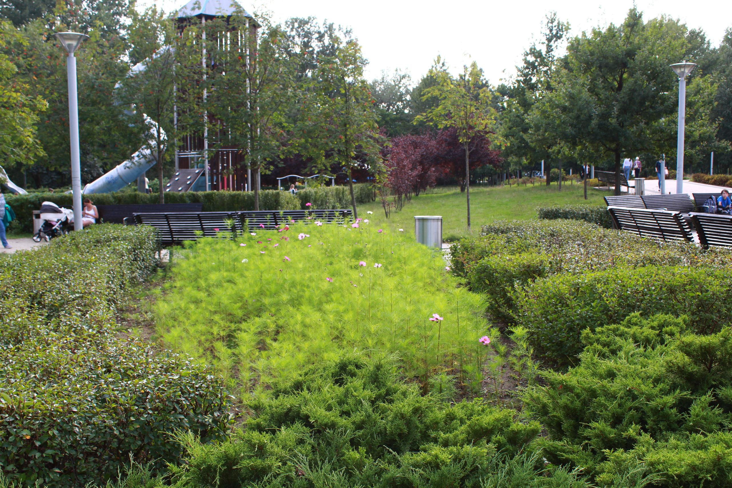 zieleń przy placu zabaw