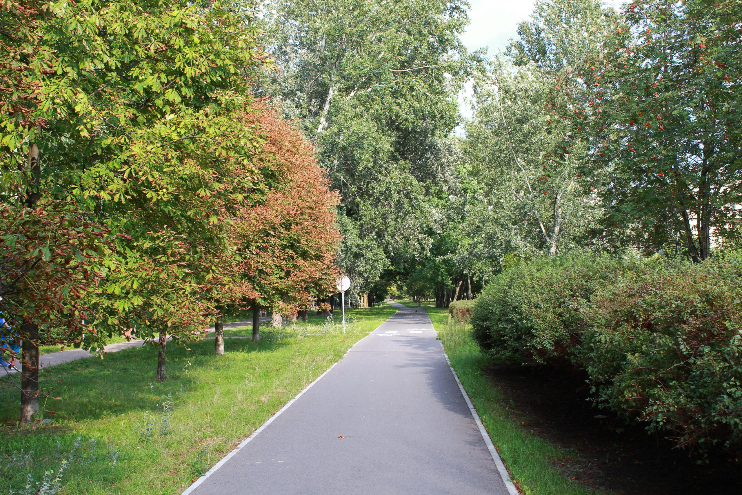 ścieżka rowerowa z zielenią po bokach
