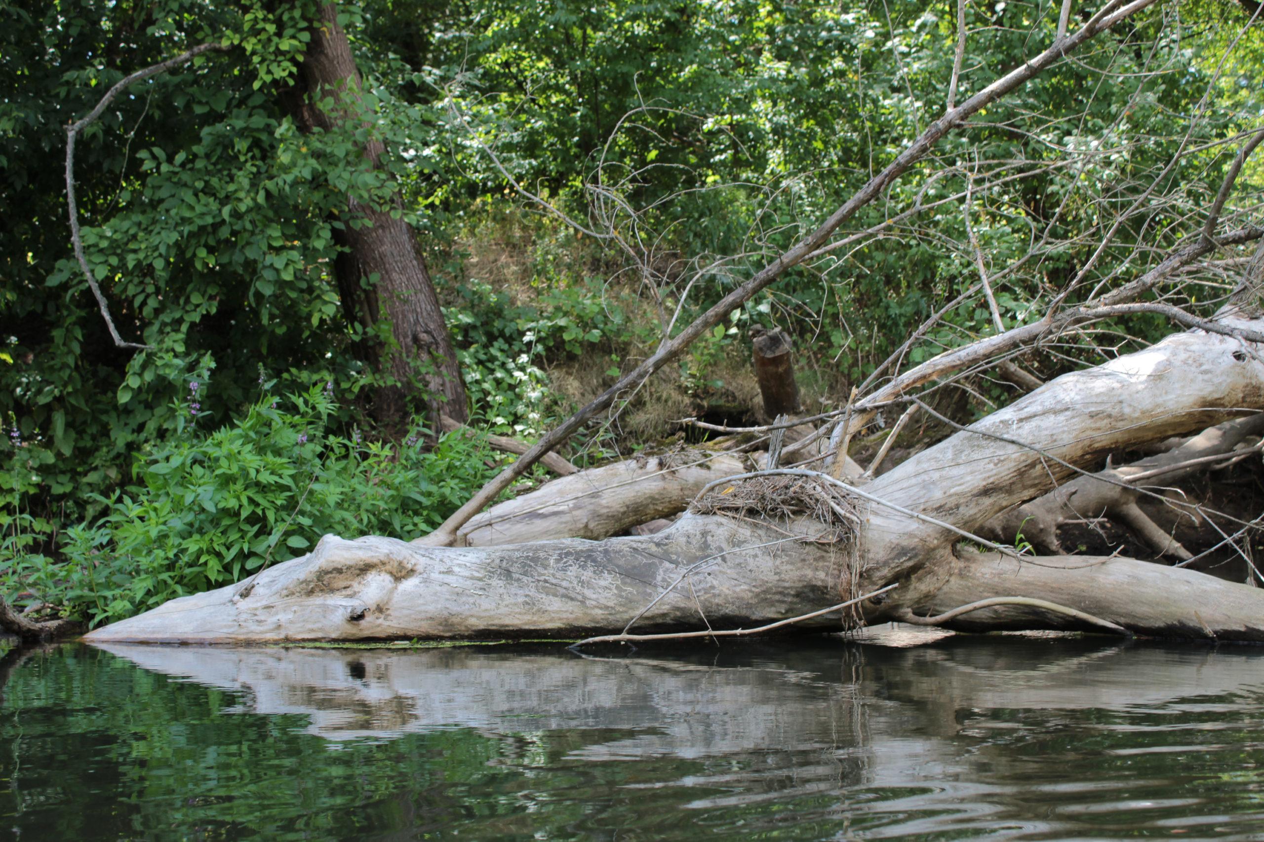drzewo wystające z wody
