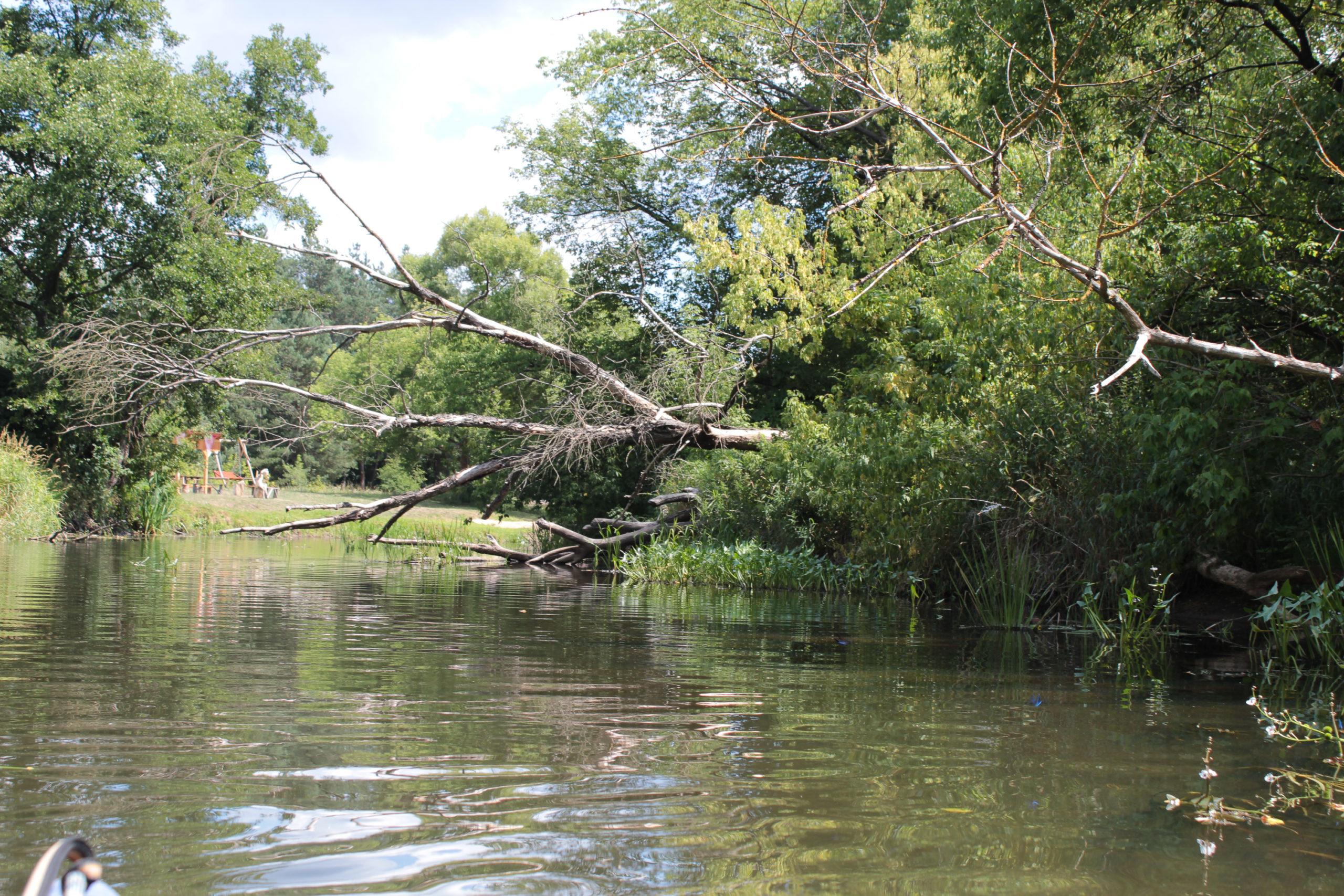 rzeka i drzewa