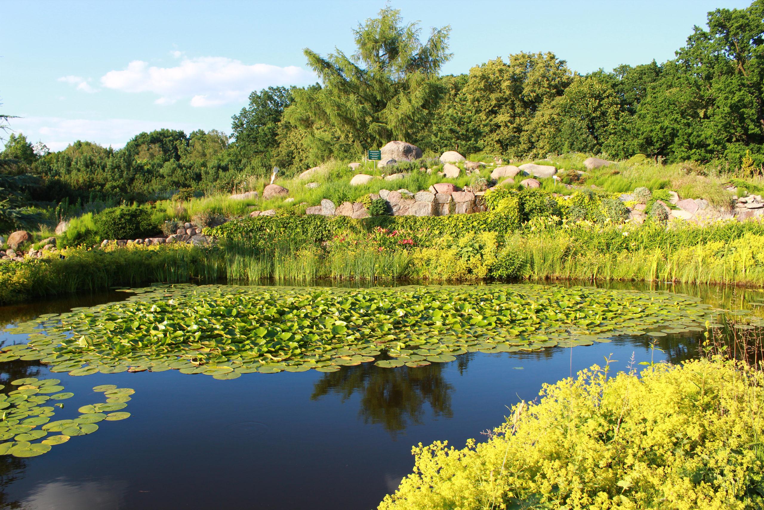 widok na lilie wodne w jeziorze