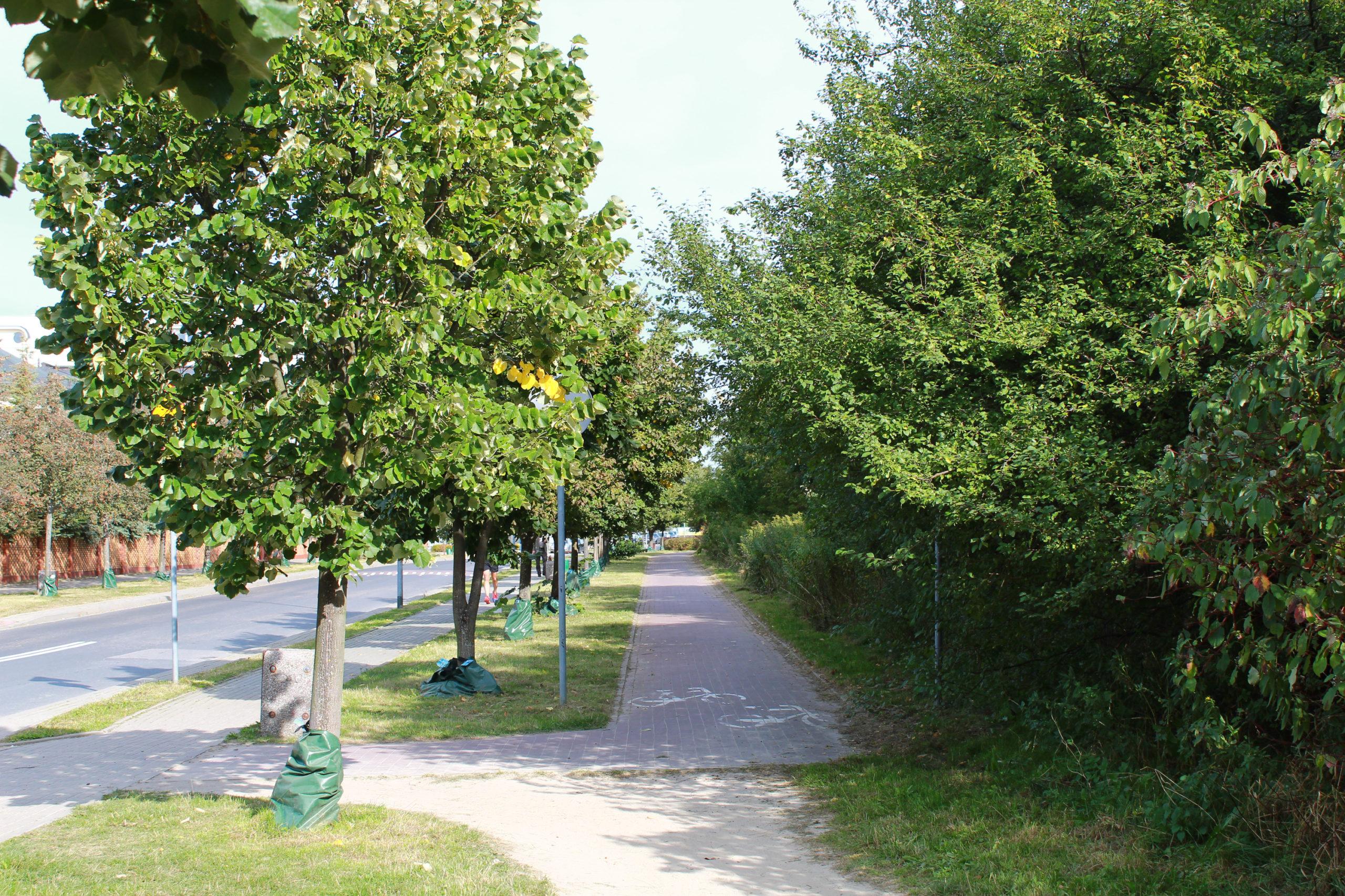 ścieżka rowerowa otoczona zielenią w mieście