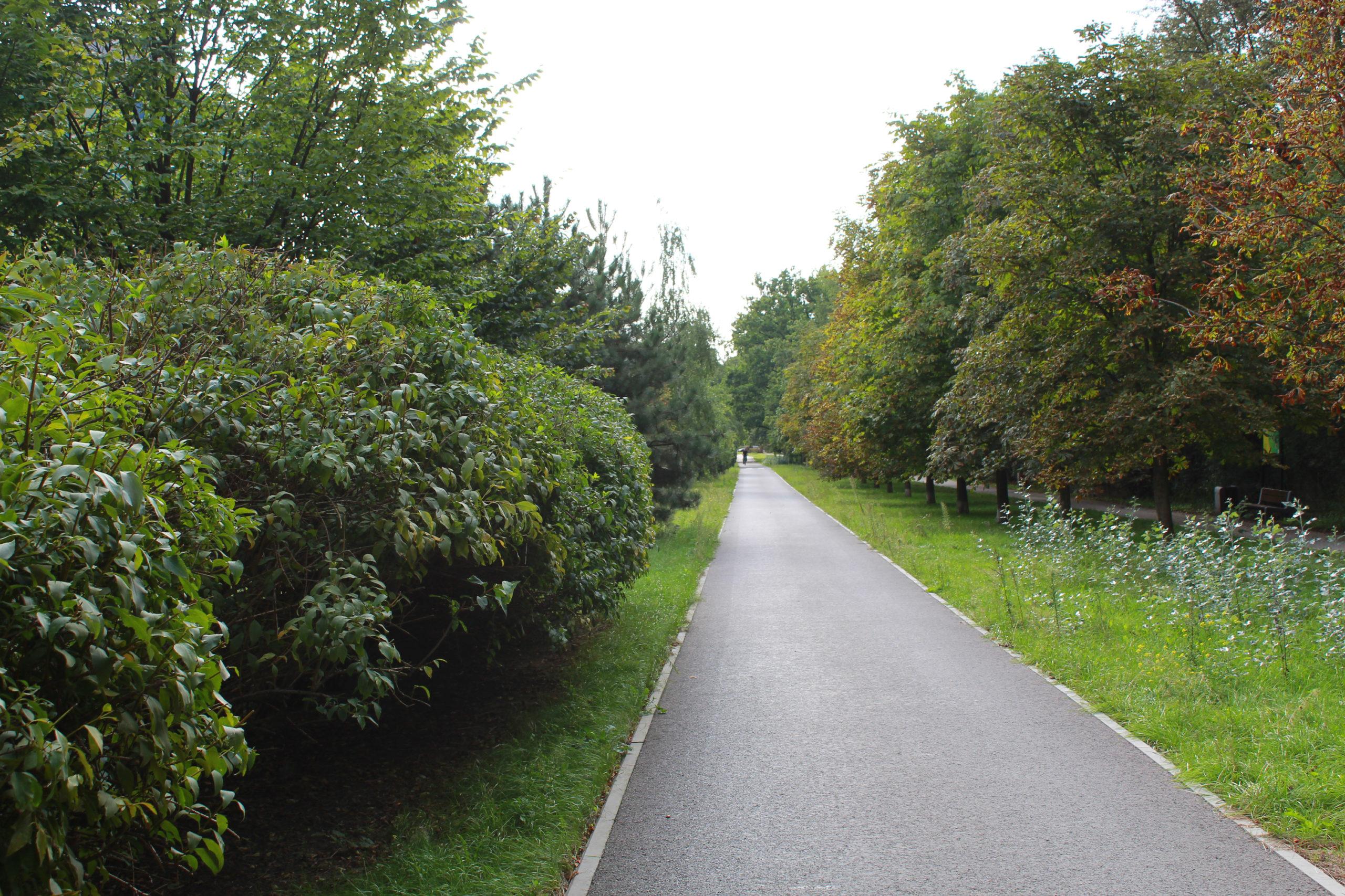 ścieżka rowerowa wśród zieleni