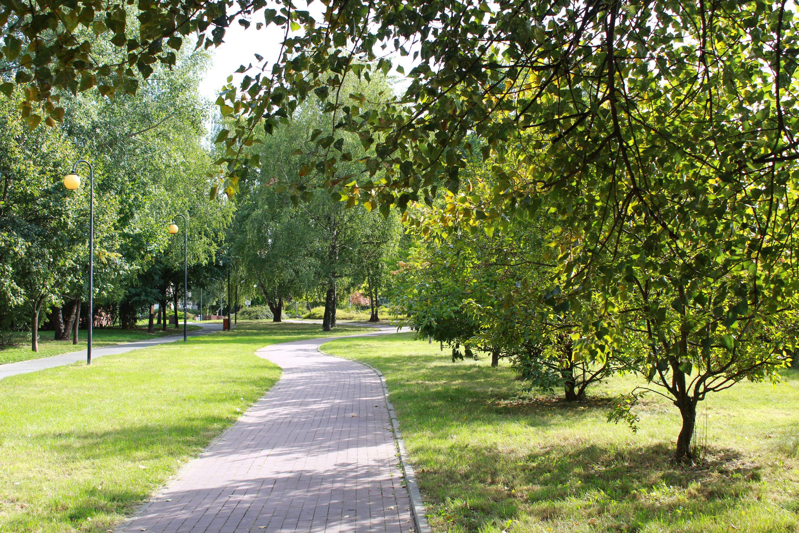 ścieżka rowerowa wśród drzew