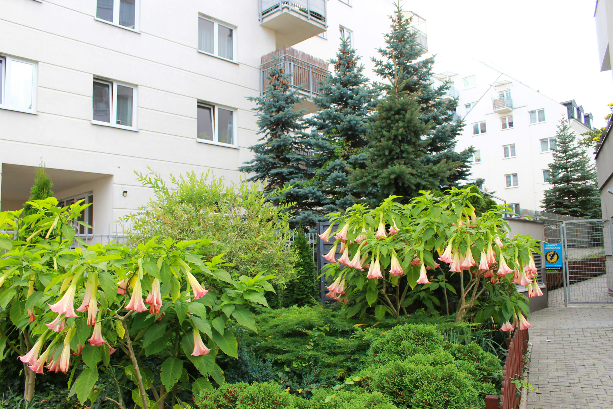 ogródek przy osiedlu