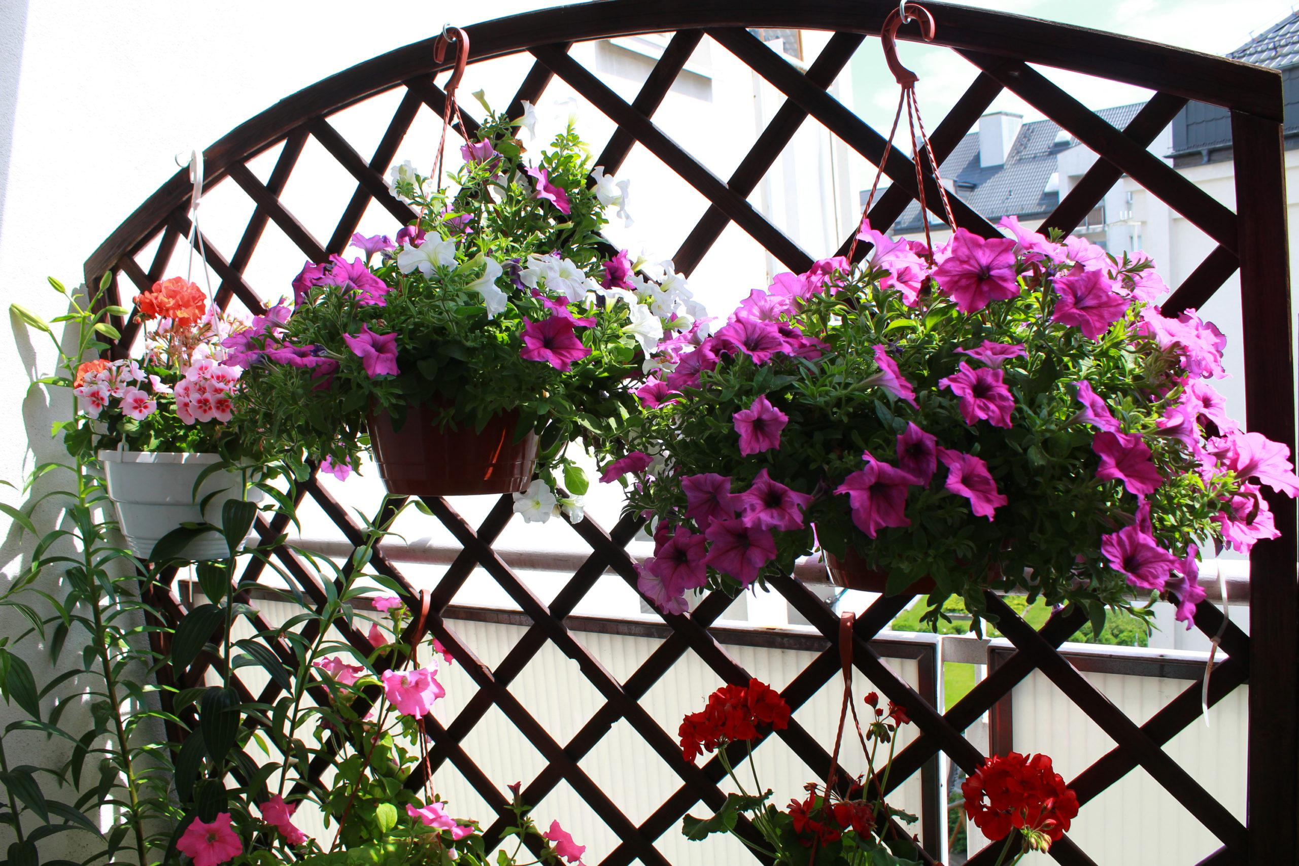 kwiaty w doniczkach na balkonie
