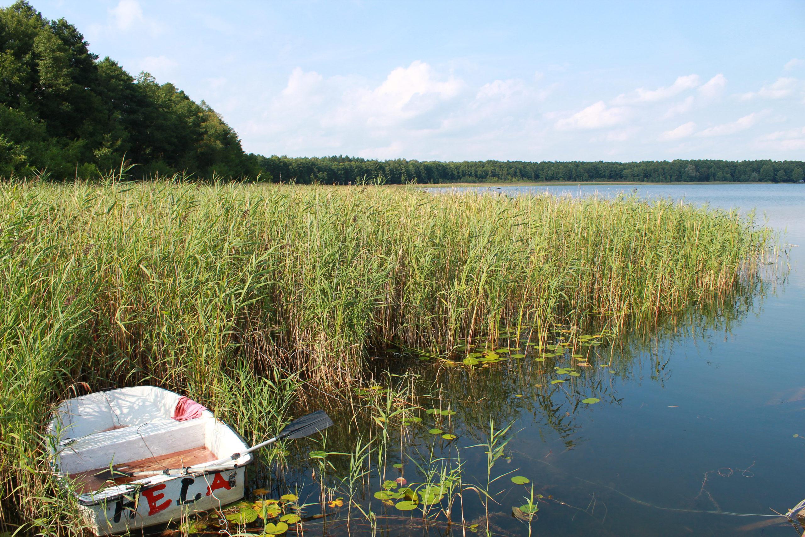 łódka wśród trzciny