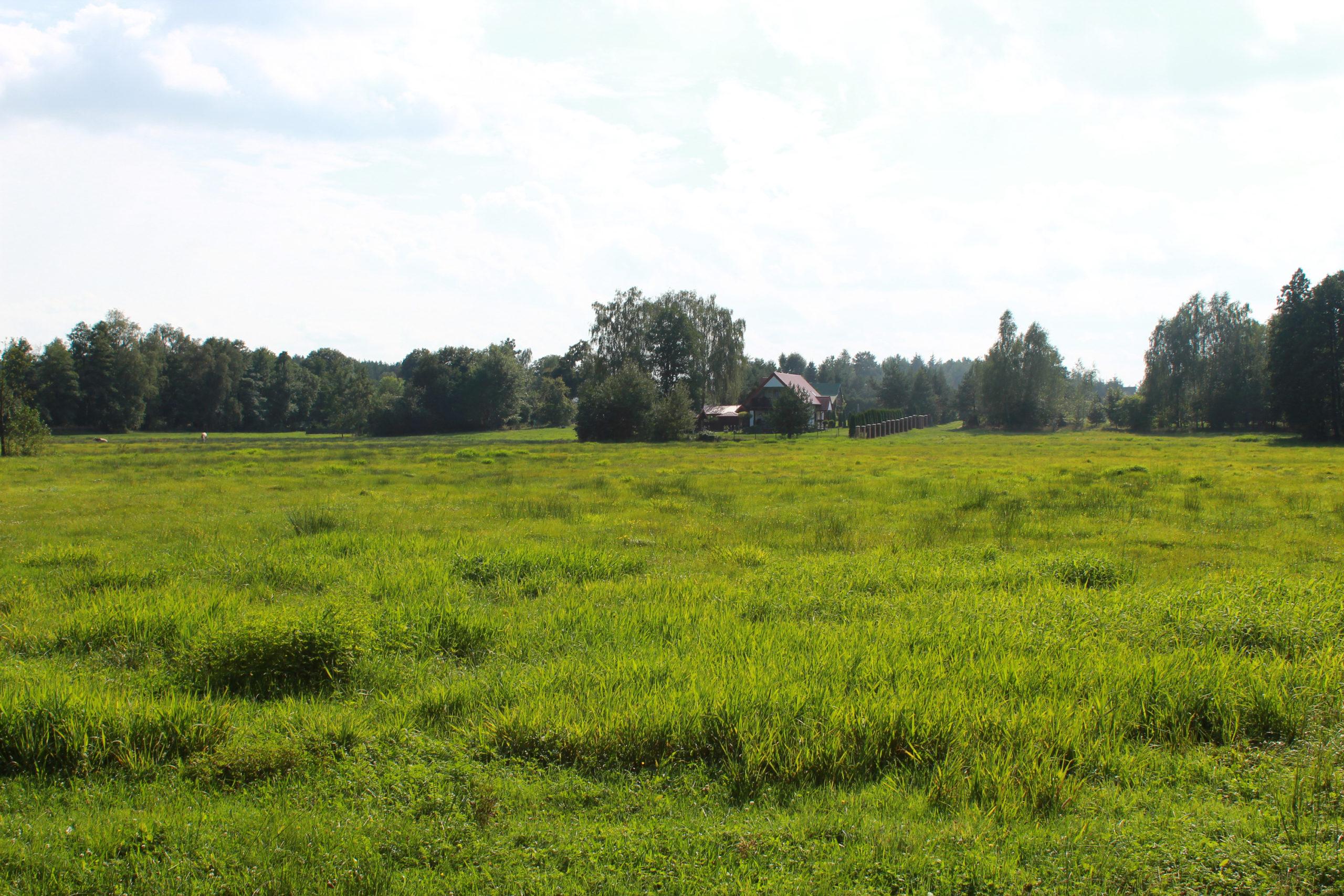 łąka i domek