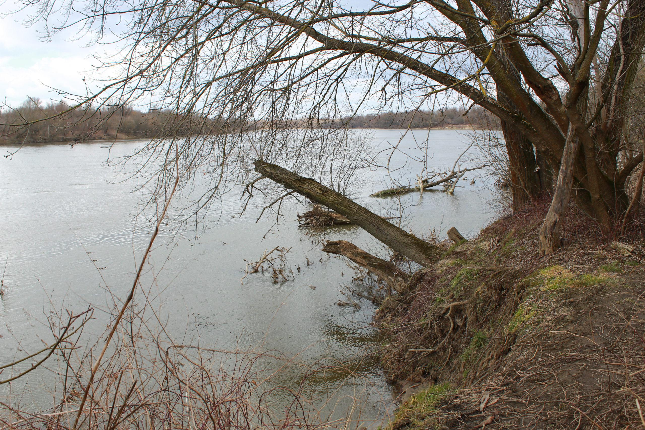 połamane drzewo nad wodą