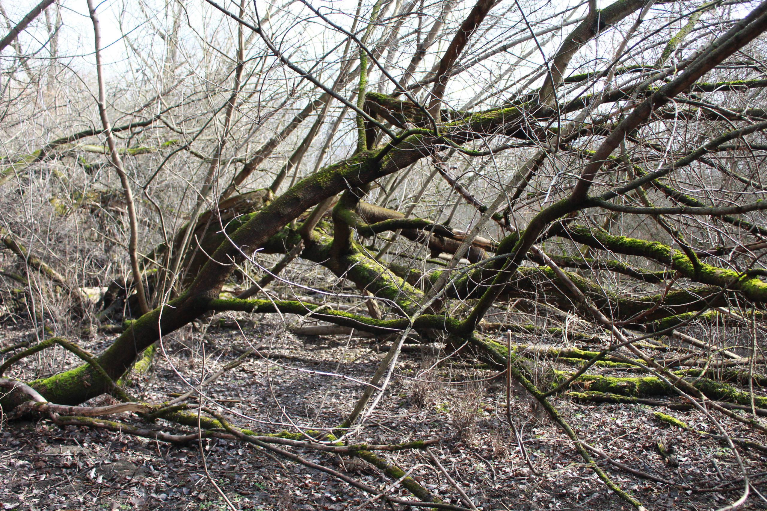 widok na gałęzie bez liści