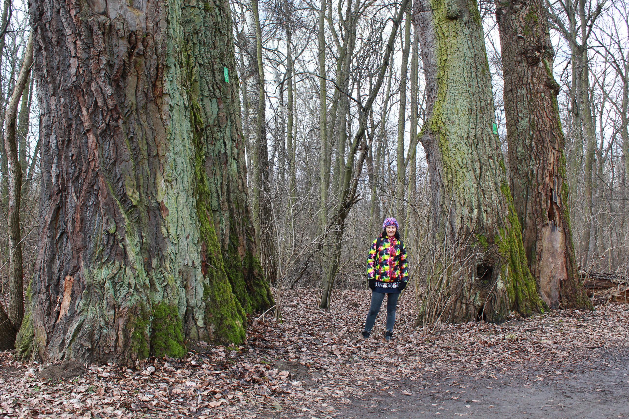 Violetta przy ogromnych drzewach