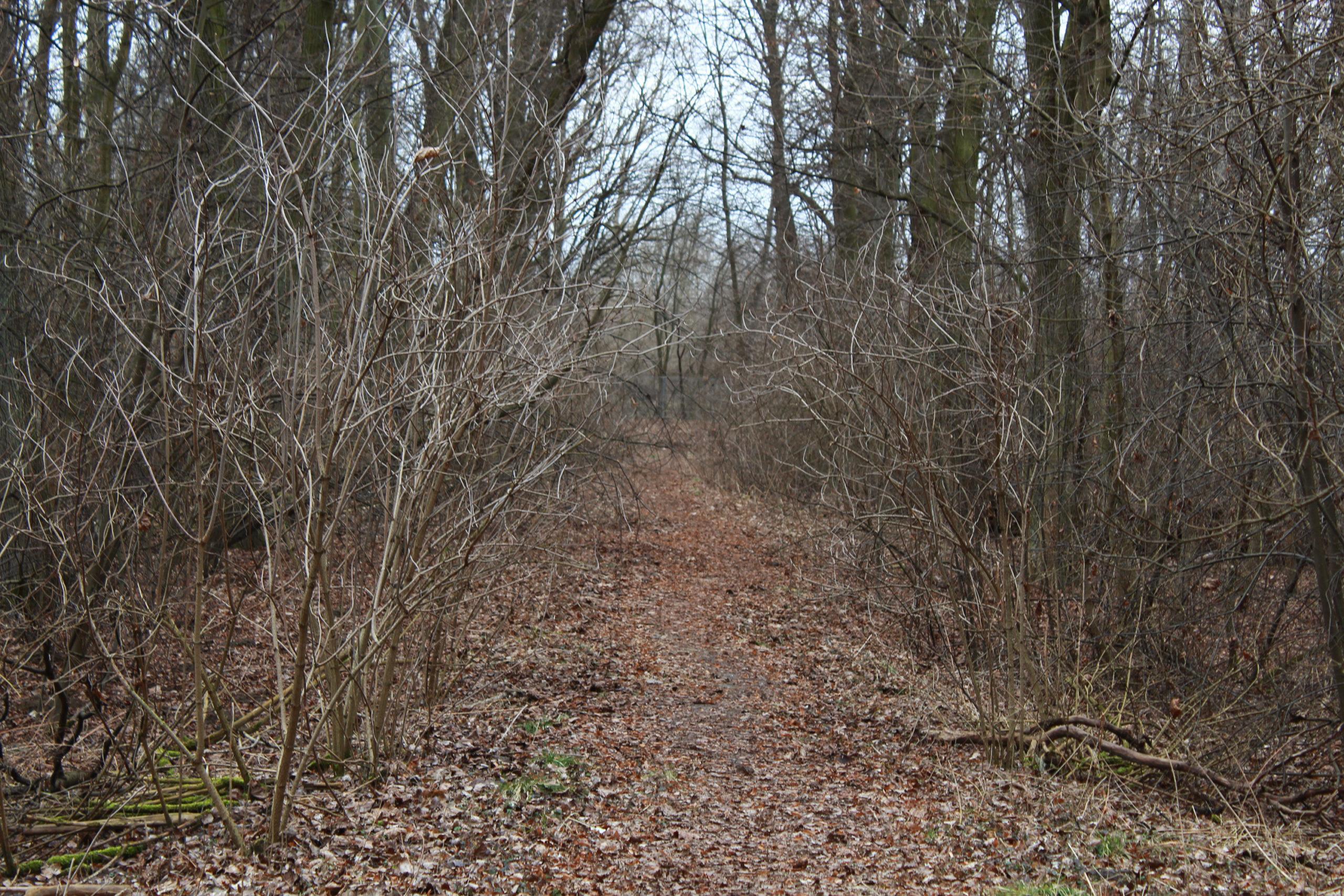ścieżką wśród drzew