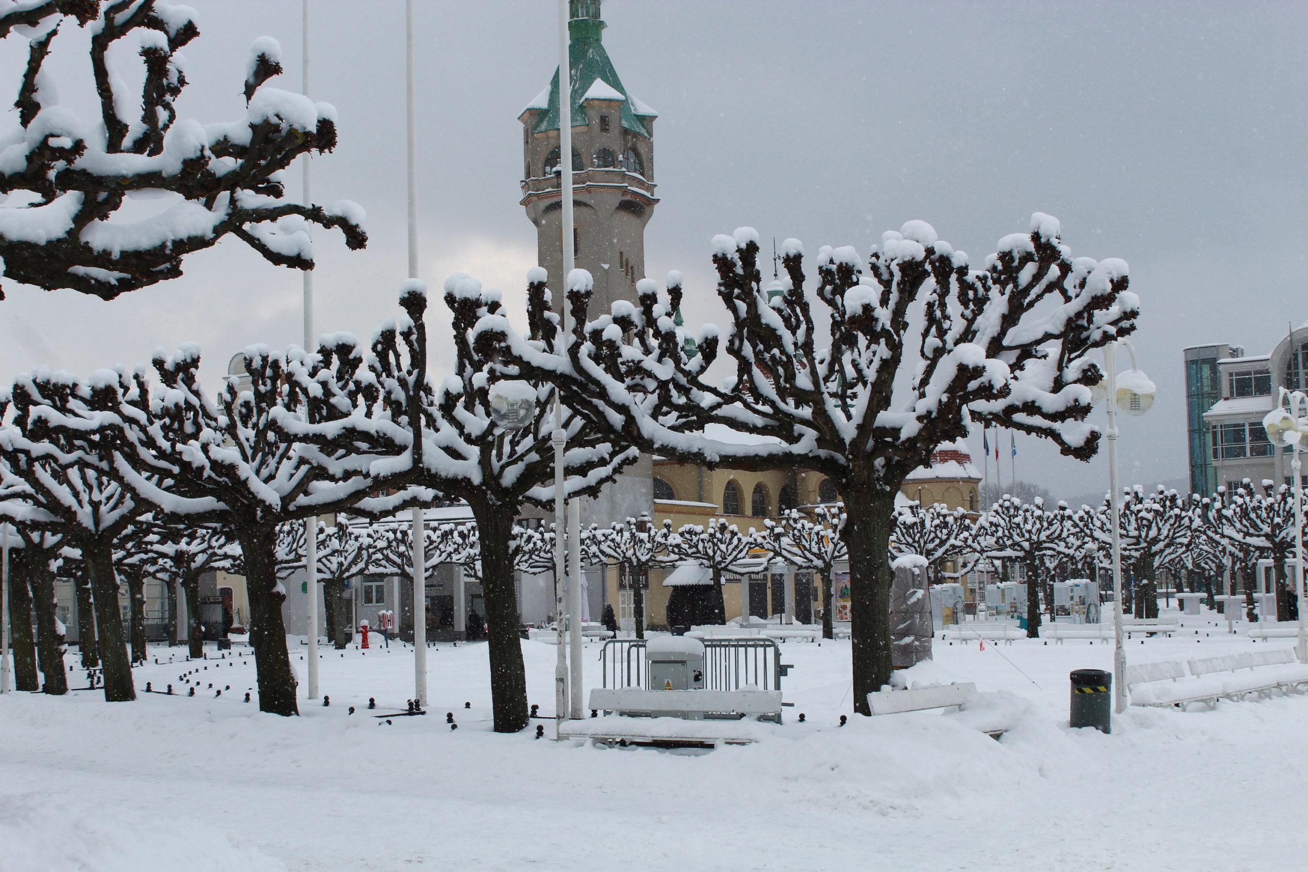 drzewa pokryte śniegiem w tle budynek
