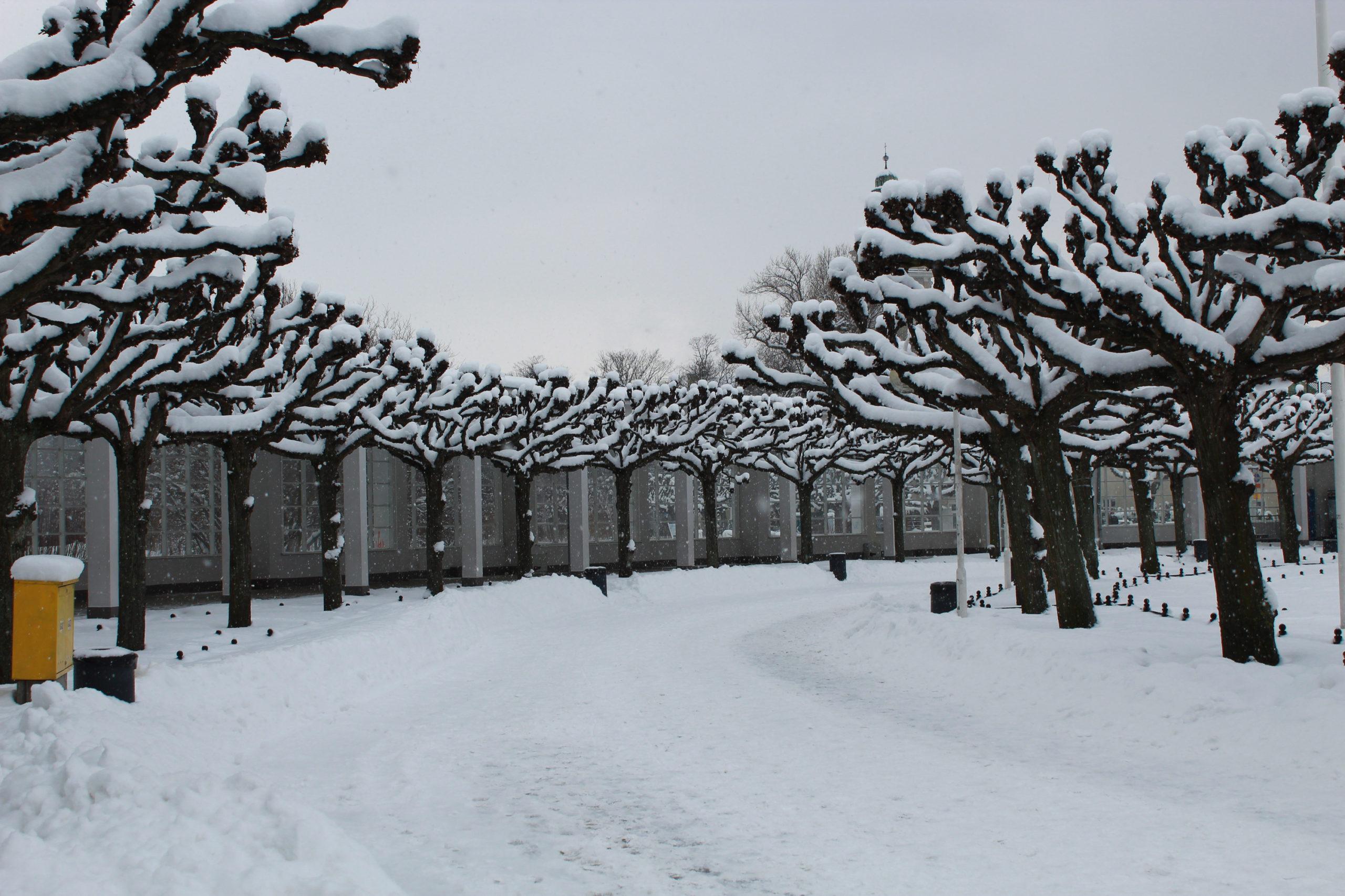 aleja drzew pokrytych śniegiem