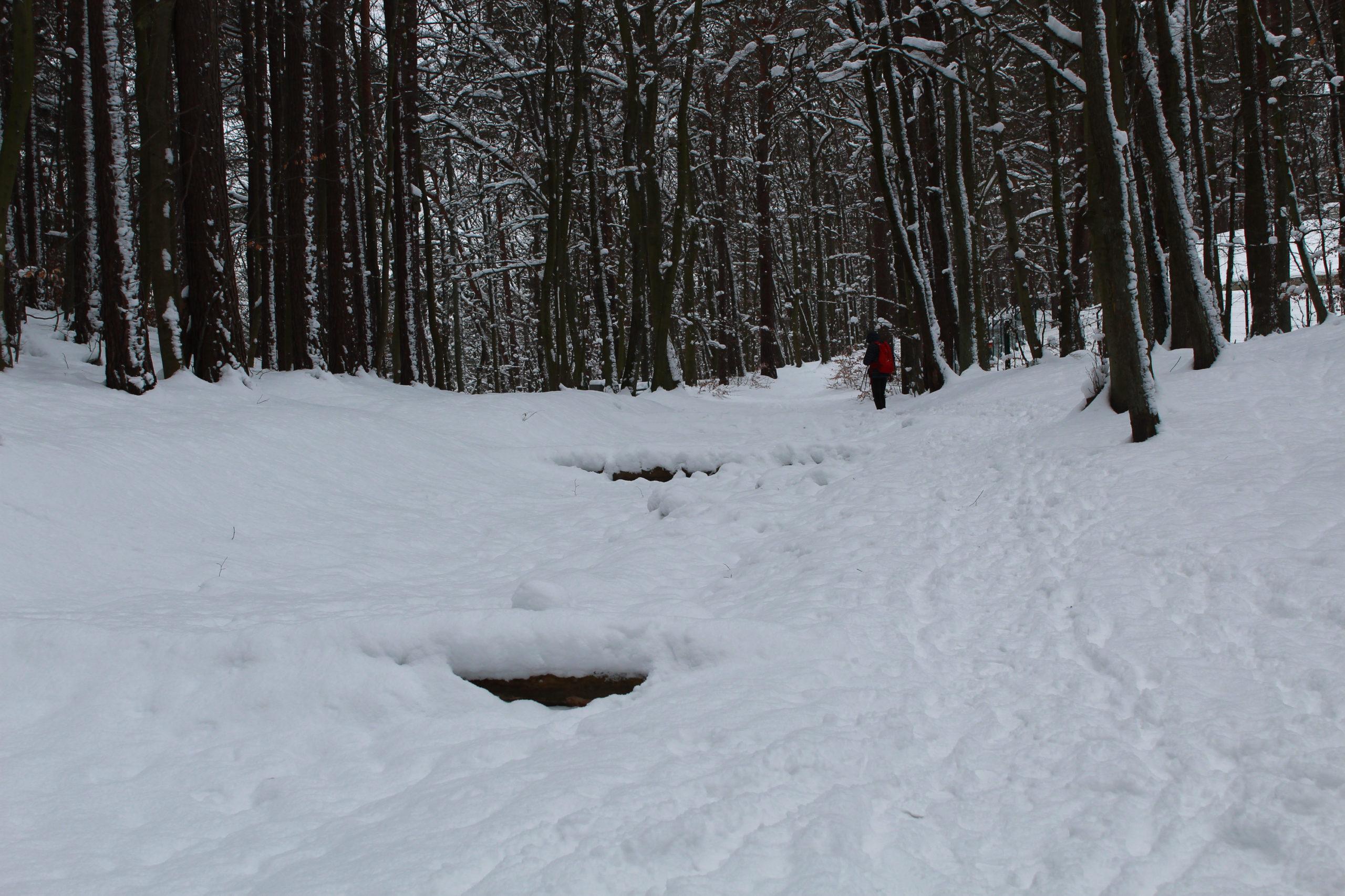 widok na zimowy las